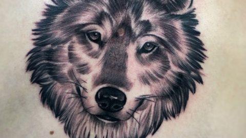 tattoo-black-lobo