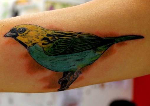 Passaro-tatuagem